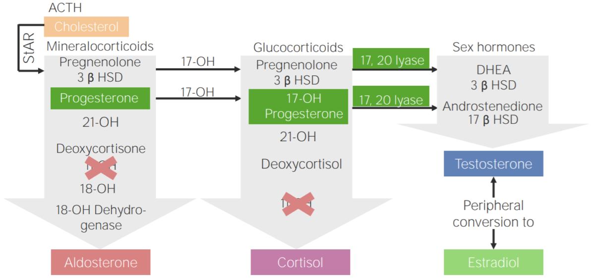 11β-hydroxylase deficiency