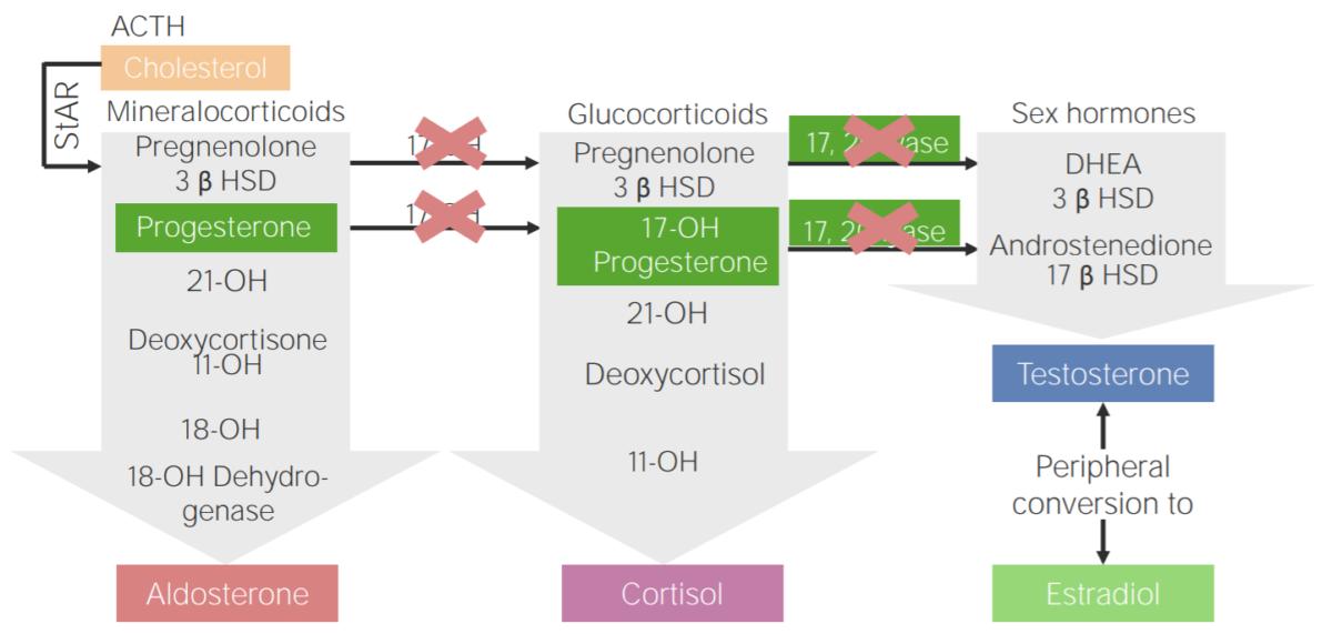 17α-hydroxylase deficiency