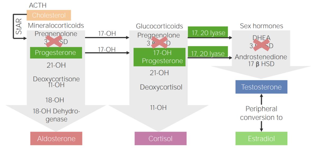 3β-hydroxysteroid dehydrogenase deficiency (3BHSD)