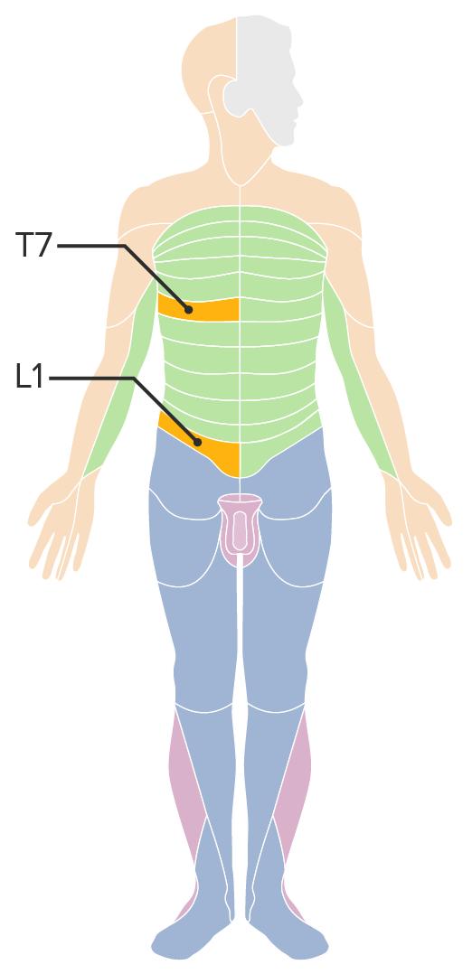 Abdominal dermatomes