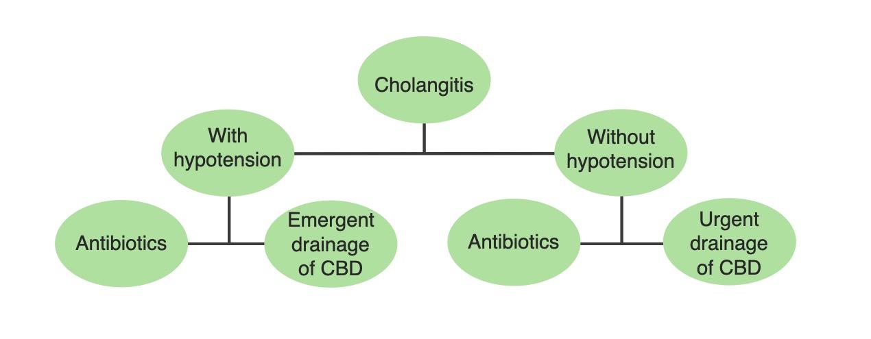 Acute cholangitis options