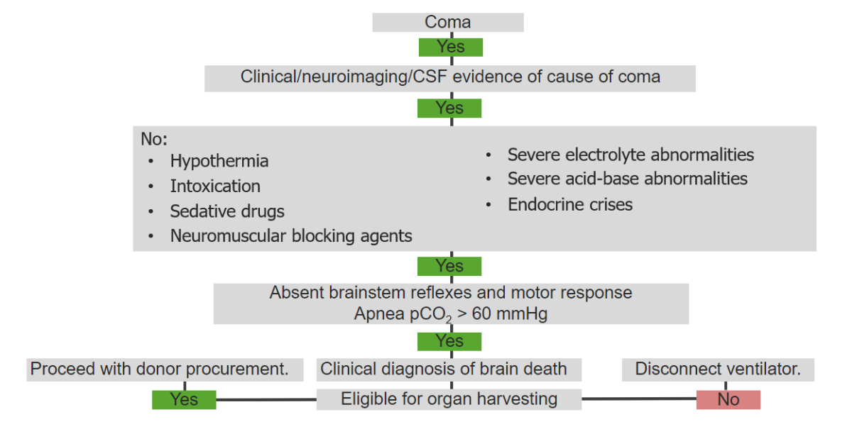 Algorithm describing the course of action in patients with brain death