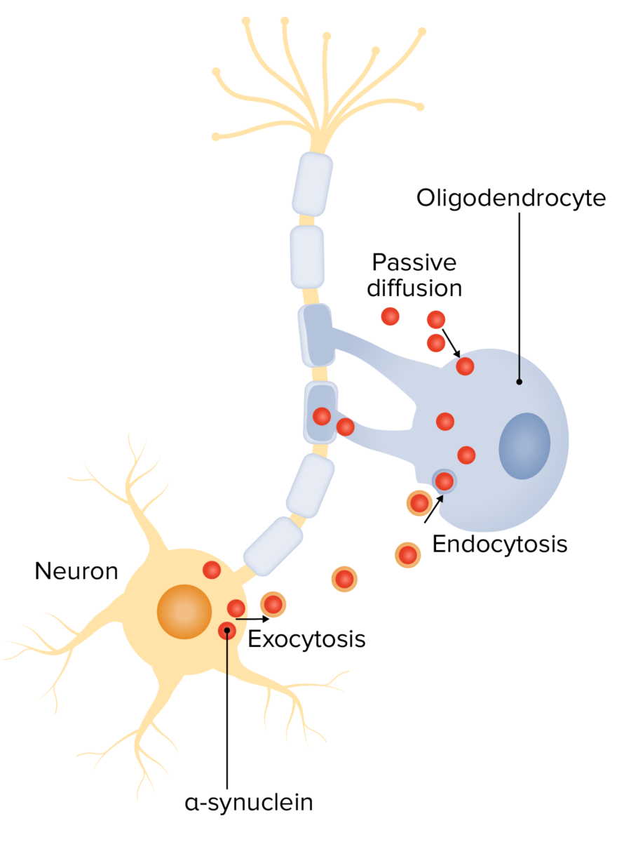 Alpha-synuclein in the pathogenesis of MSA