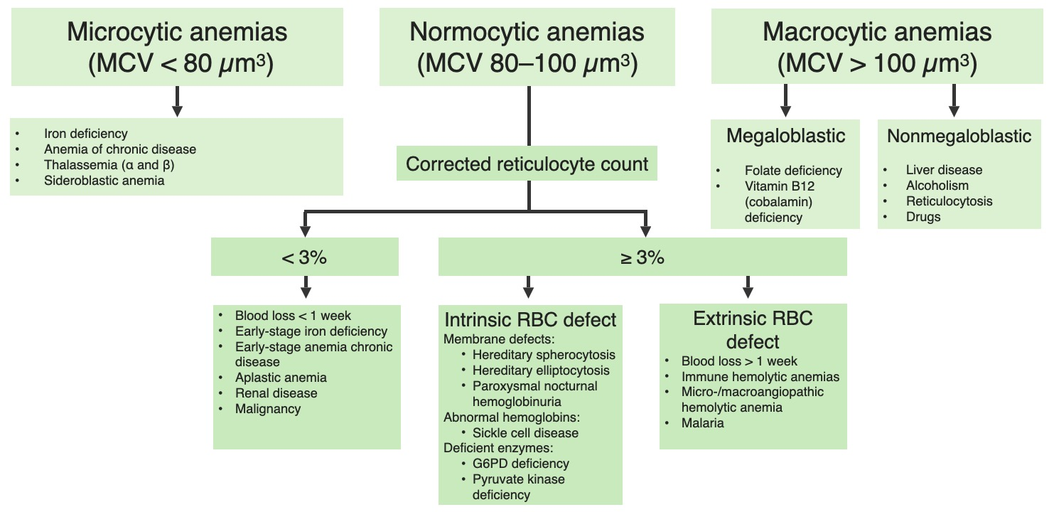 Anemia overview chart