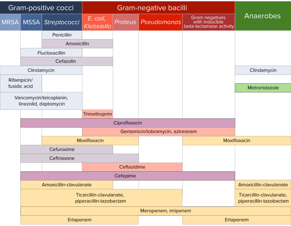 Antibiotic sensitivity chart