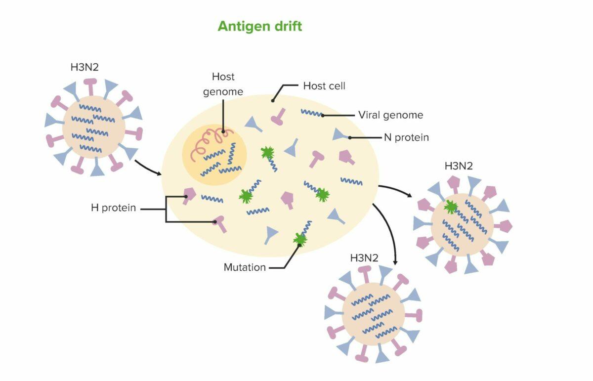 Antigen-drift influenza