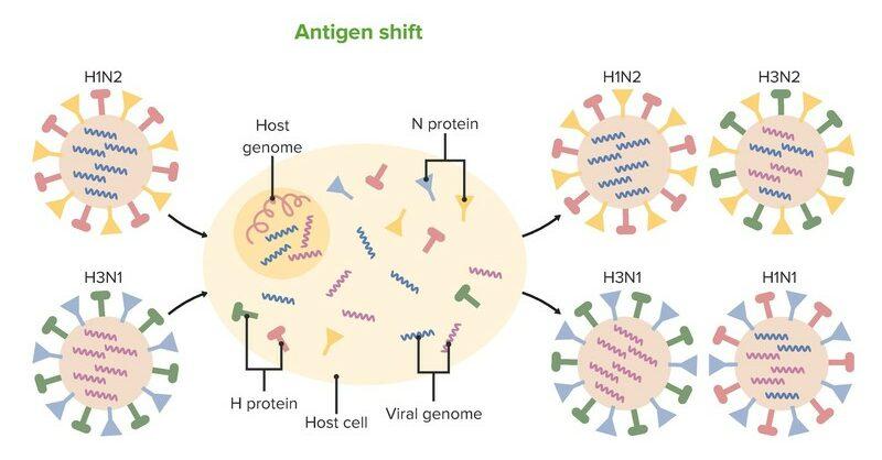 Antigen shift