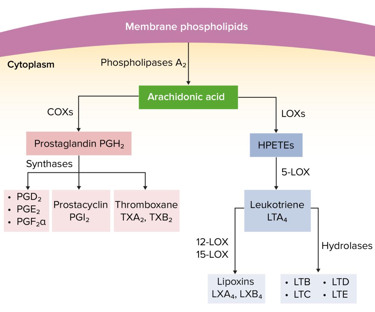 Arachidonic acid pathway Nonsteroidal anti-inflammatory drugs