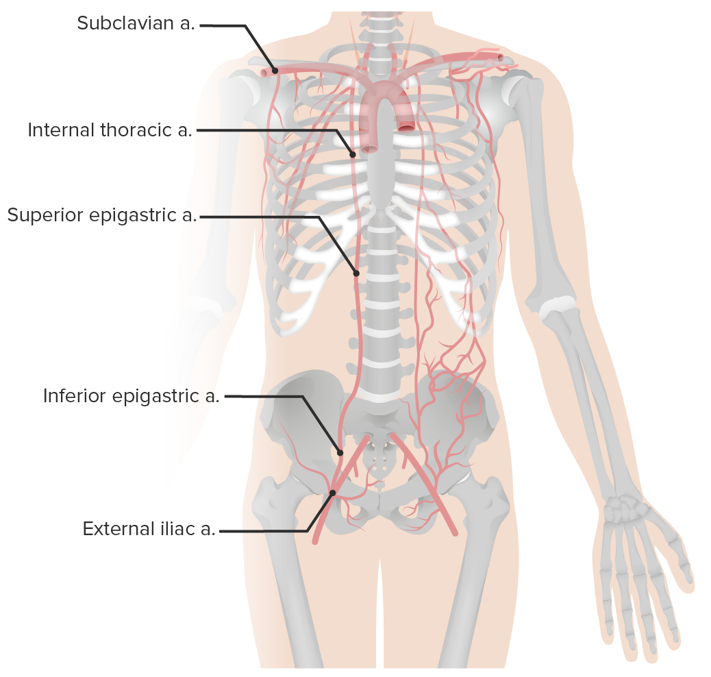 Arterial supply of the abdominal wall