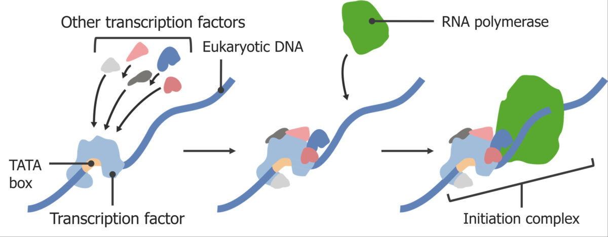 Assembling the initiation complex RNA