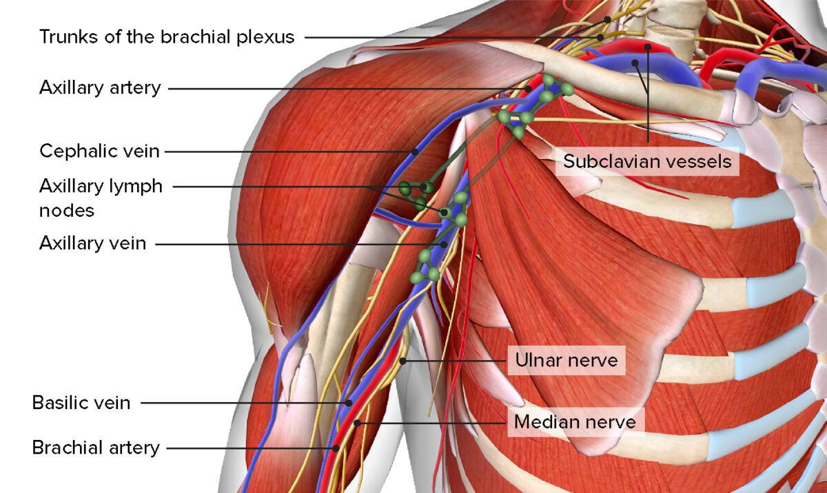 Axillary Lymph