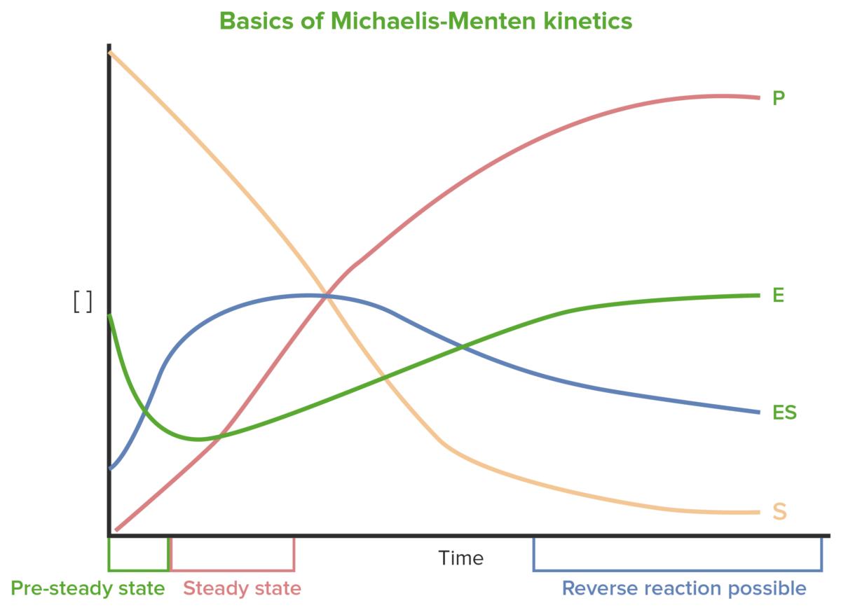 Basic of Michaelis-Menten Kinetics