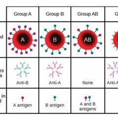 Blood-type antigens