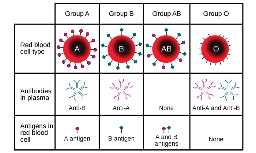 Blood types chart