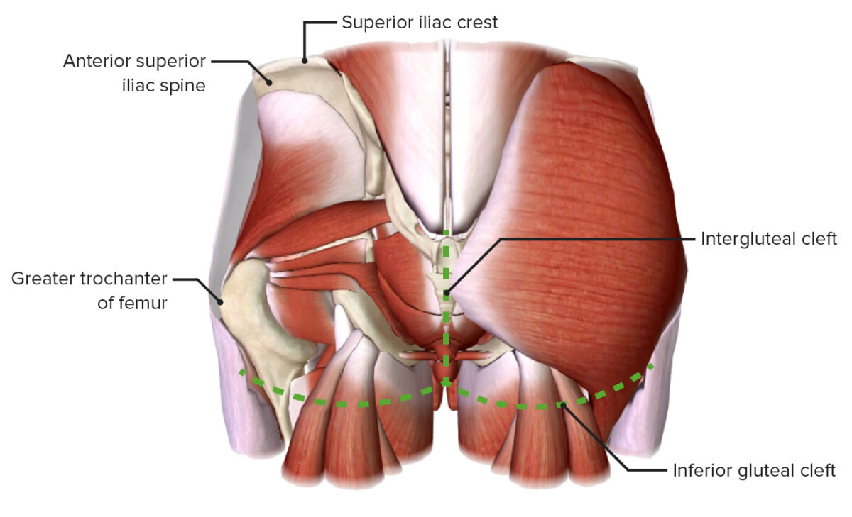 Boundaries of the gluteal region