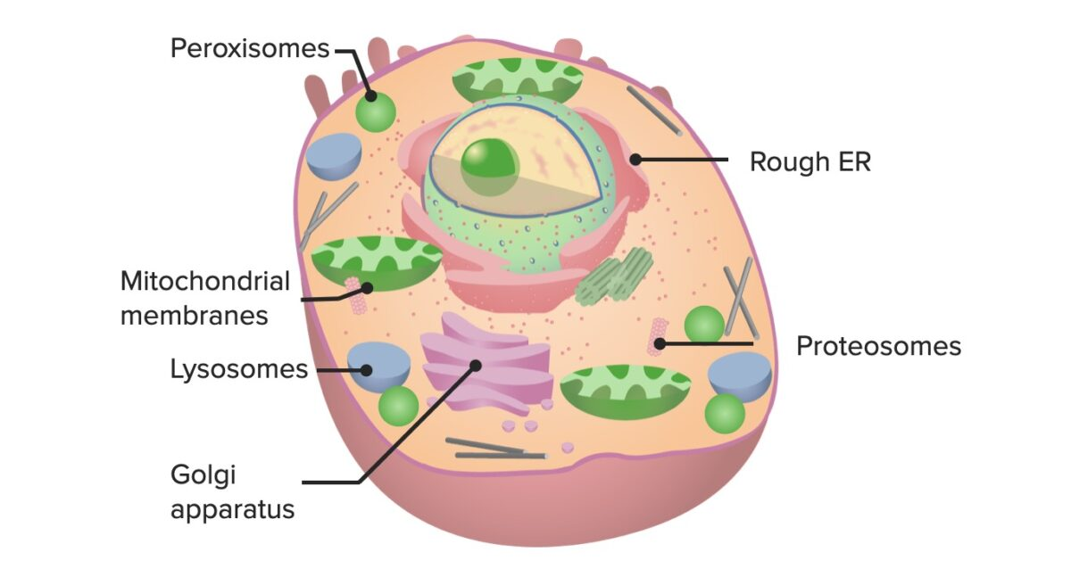 Cell and its organelles