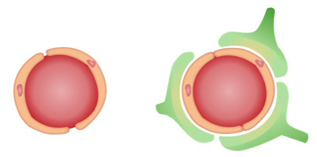 Cell depiction of blood–brain barrier