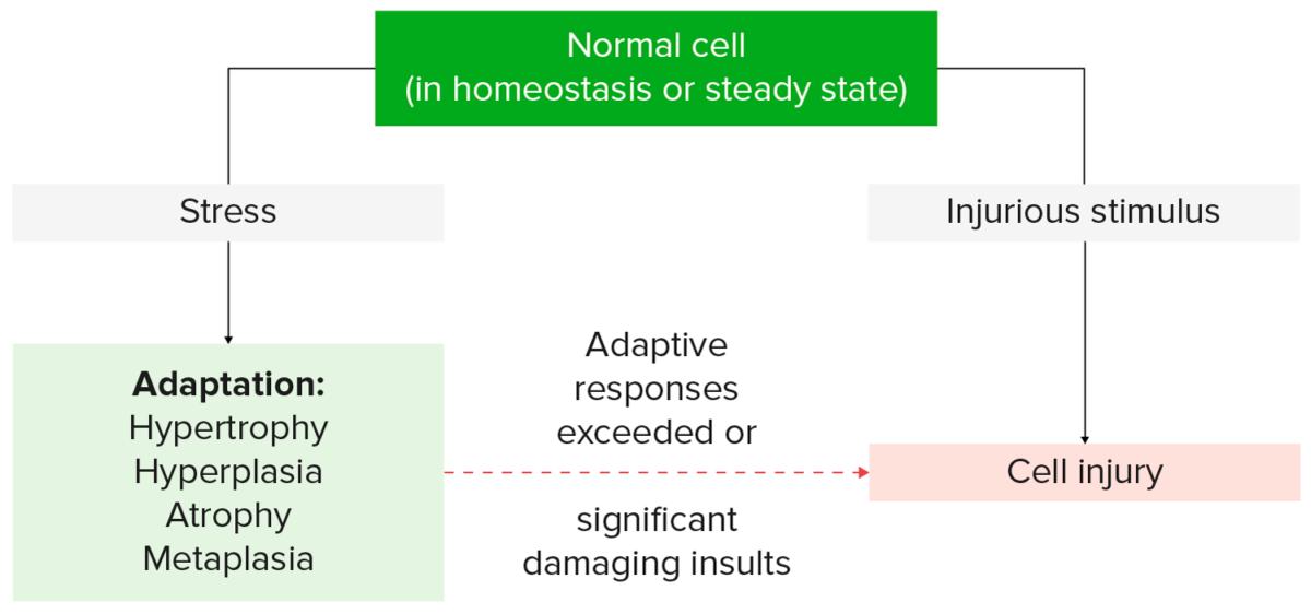 Cellular response to stress and stimuli