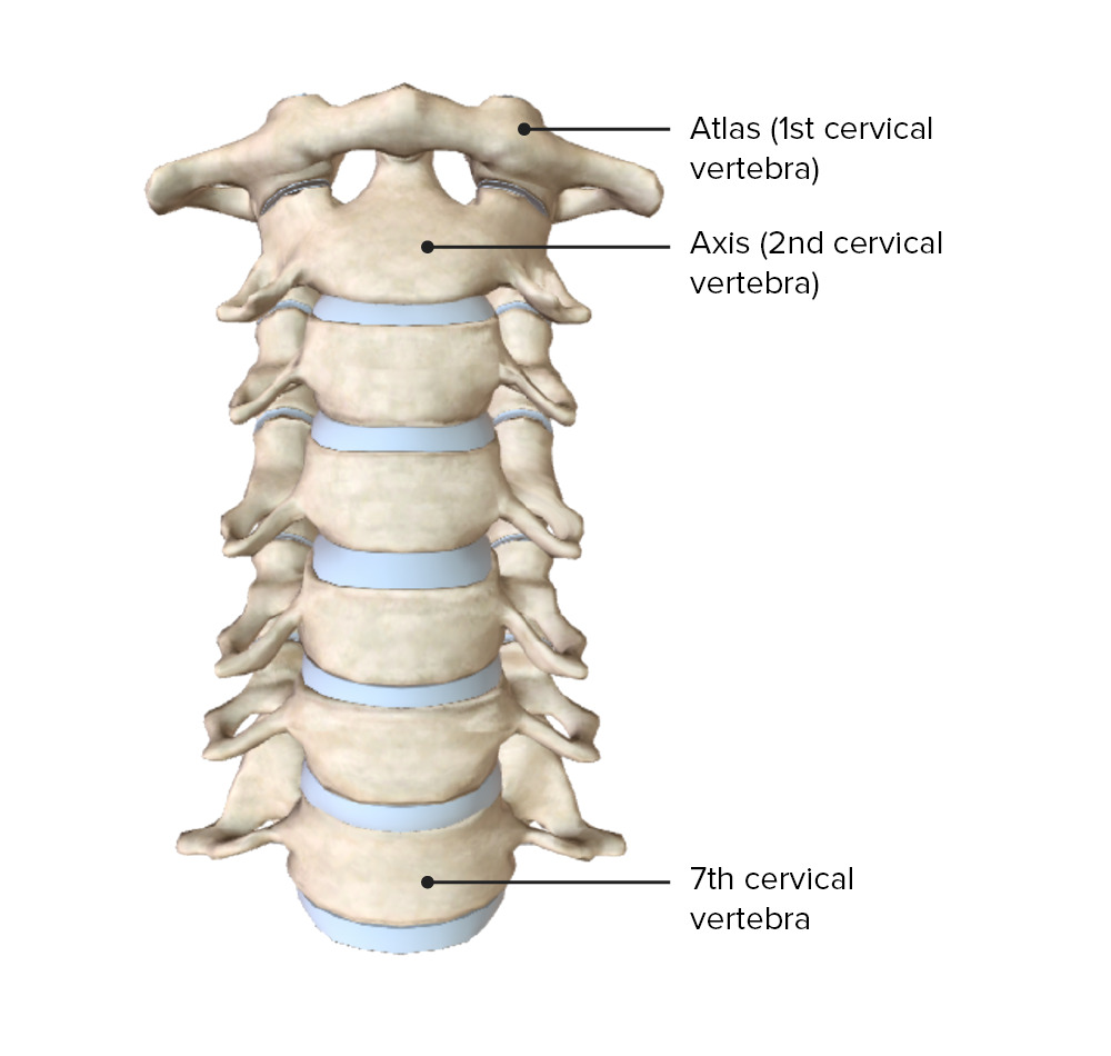 Cervical vertebrae showing atlas and axis