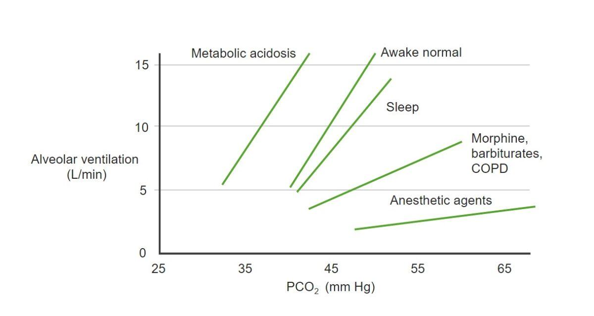 Changes of PCO₂ and alveolar ventilation relationship Respiratory regulation