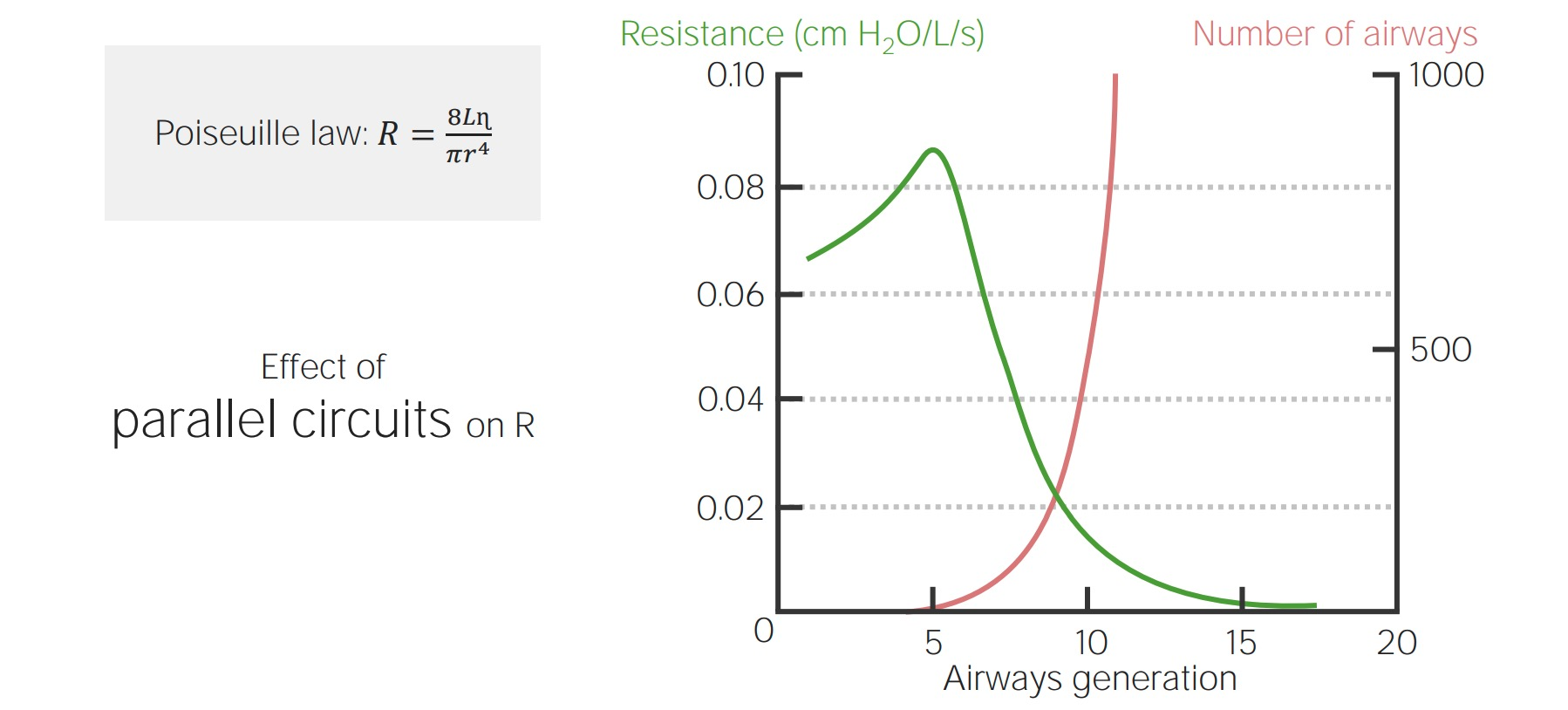 Chart describing the inverse proportion between airway resistance and the number of airways