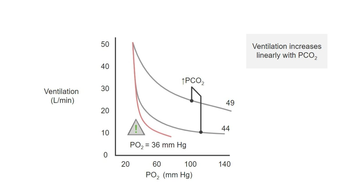 Chart of PO₂ (x-axis) and ventilation (y-axis) Respiratory regulation