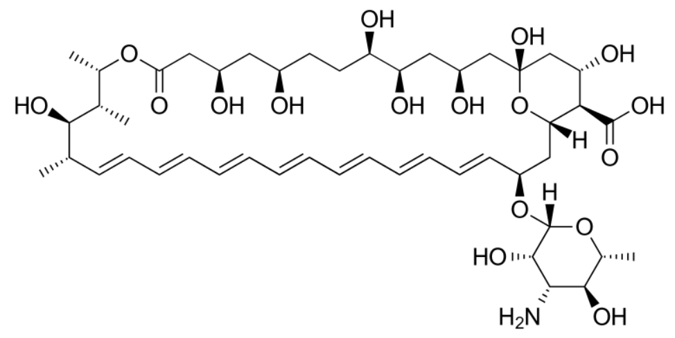Chemical structure of amphotericin B polyenes