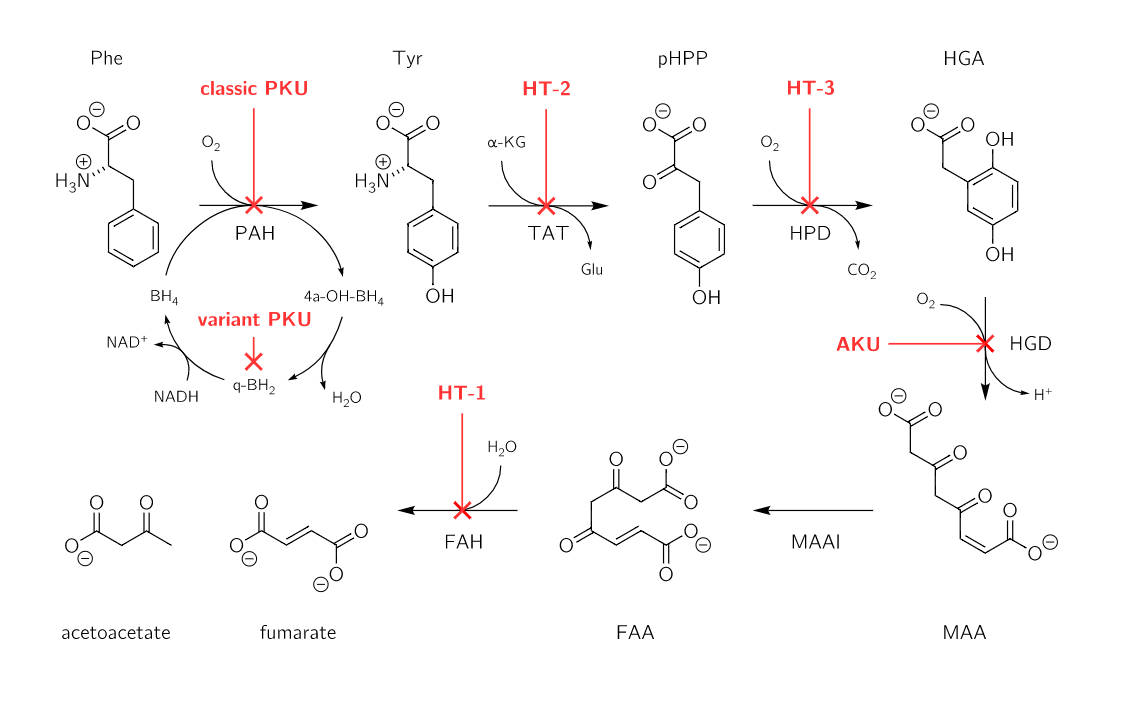 Classic PKU Disorders of amino acid metabolism