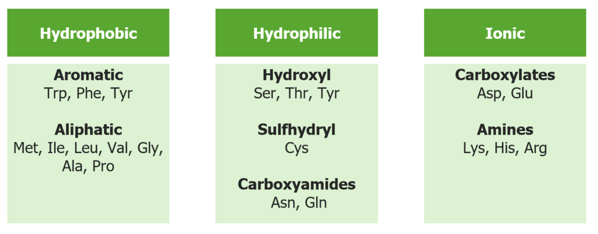 Classification of amino acids by R group