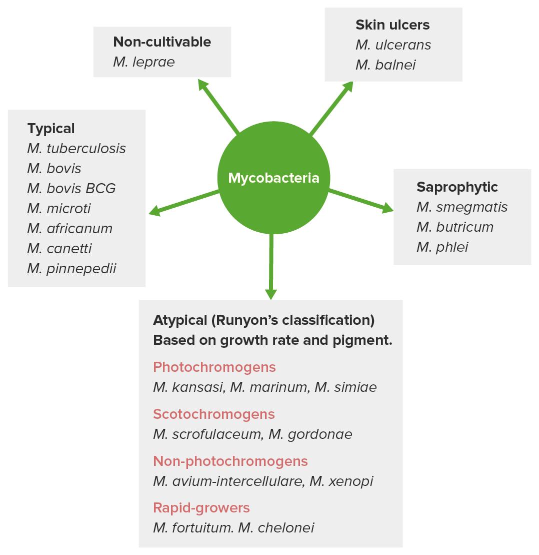 Classification of mycobacteria flowchart