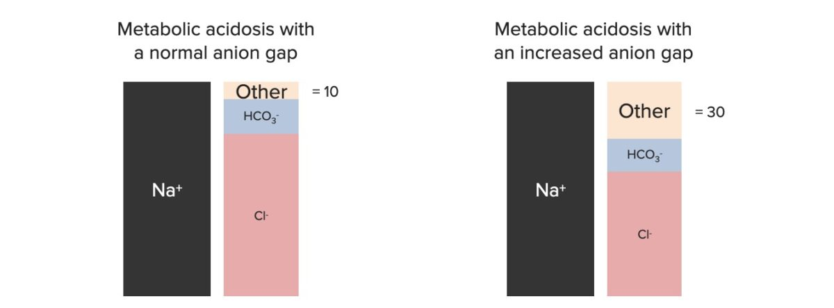 Components of the anion gap