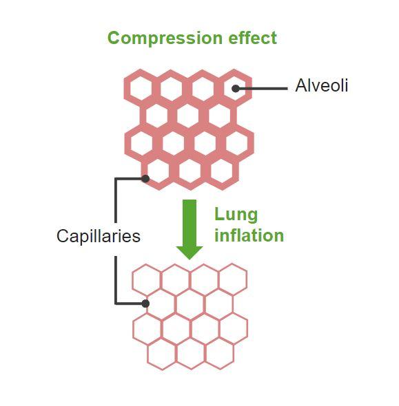 Compression Effect gas exchange Respiratory regulation