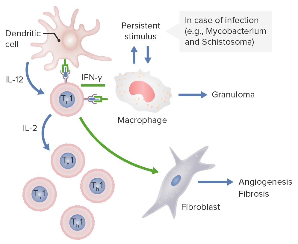 Dendritic cells releasing IL-12