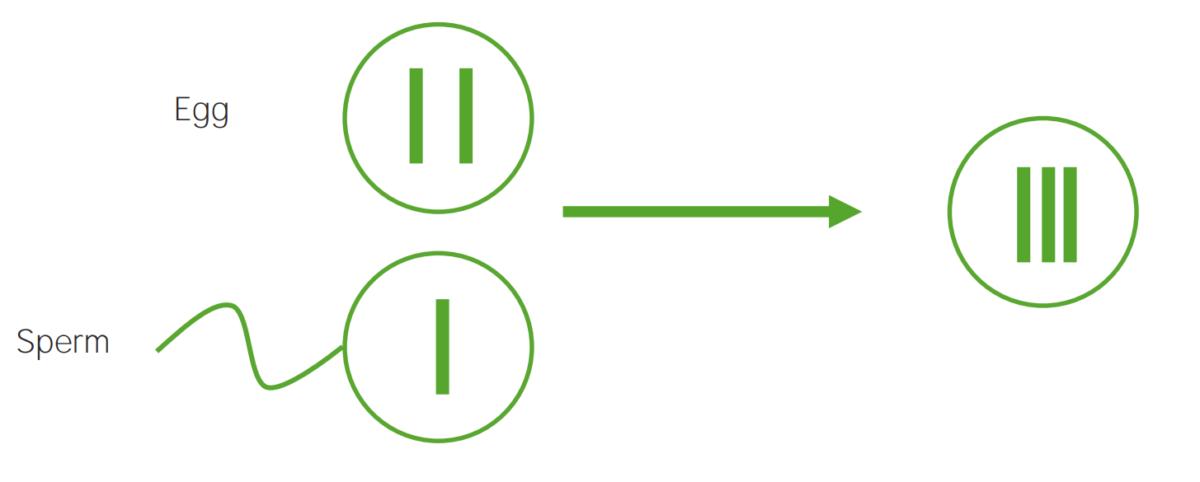 Diagram explaining the etiological mechanism of non-disjunction