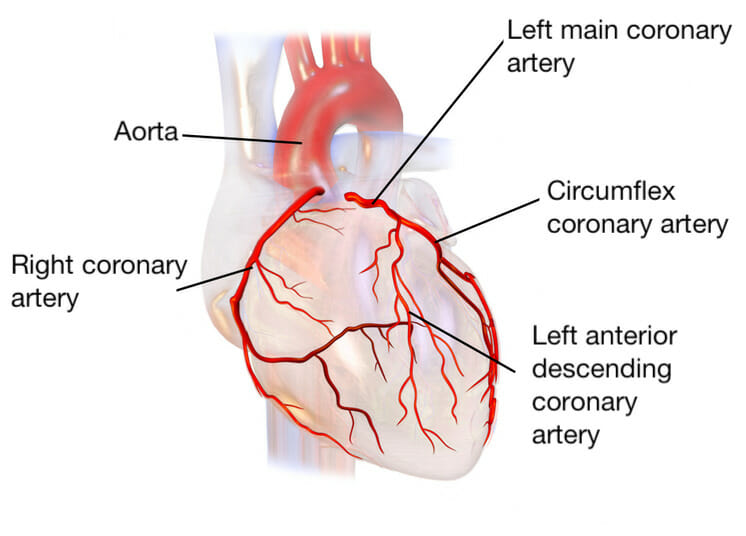 Diagram of the main coronary arteries