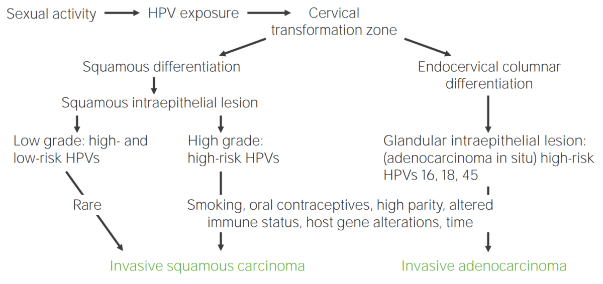 Diagram showcasing the pathogenesis of cervical carcinoma due to HPV