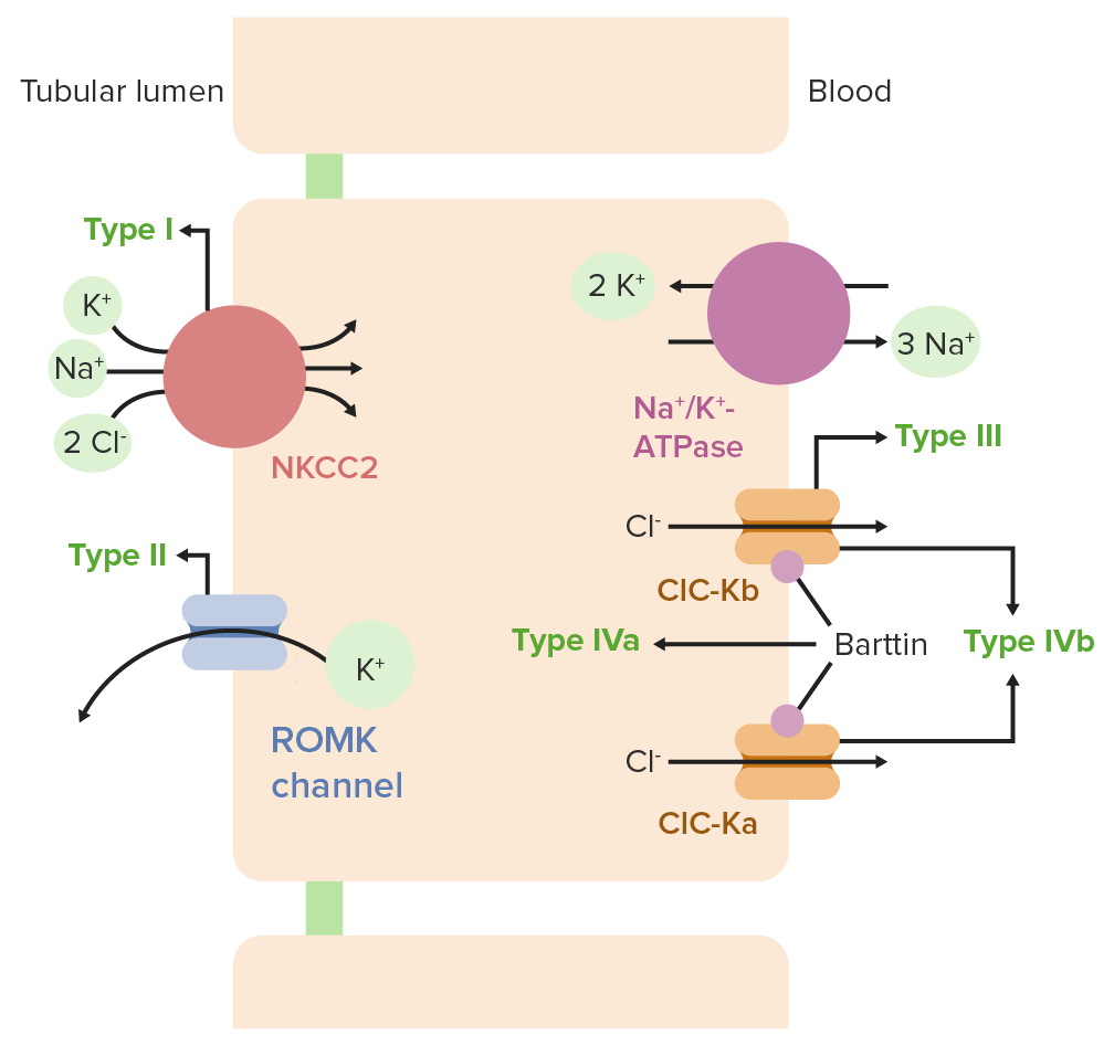 Different Channelopathies in Bartter's syndrome