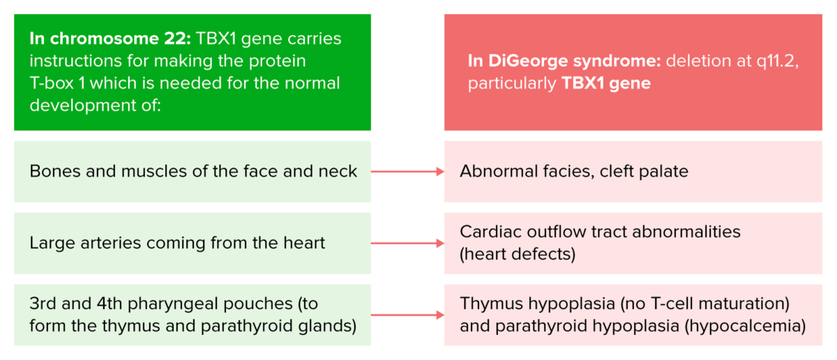 Digeorge syndrome genetics and presentation
