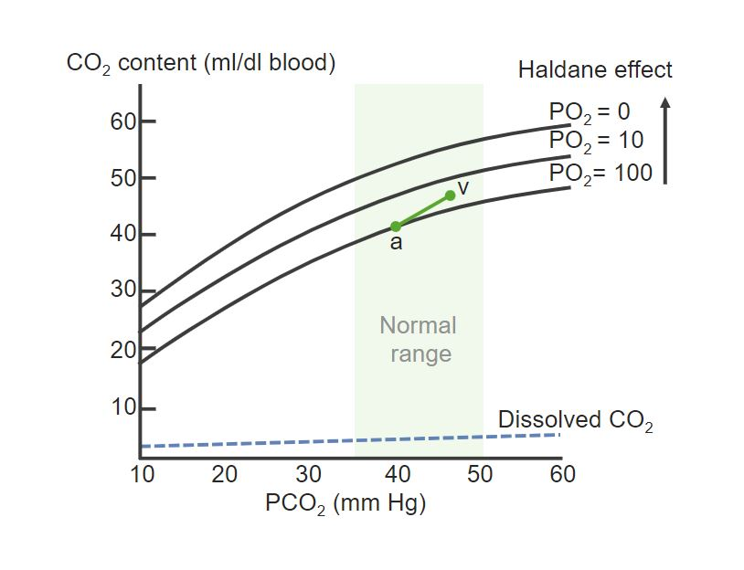 Dissociation curve of Hb and CO₂ Gas exchange Respiratory regulation