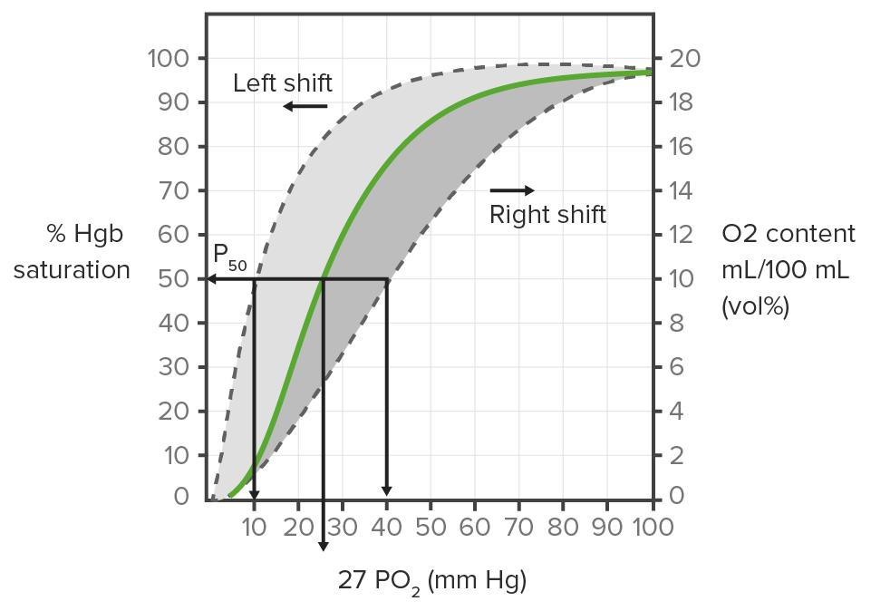 Dissociation curve of Hemoglobin gas exchange Respiratory regulation