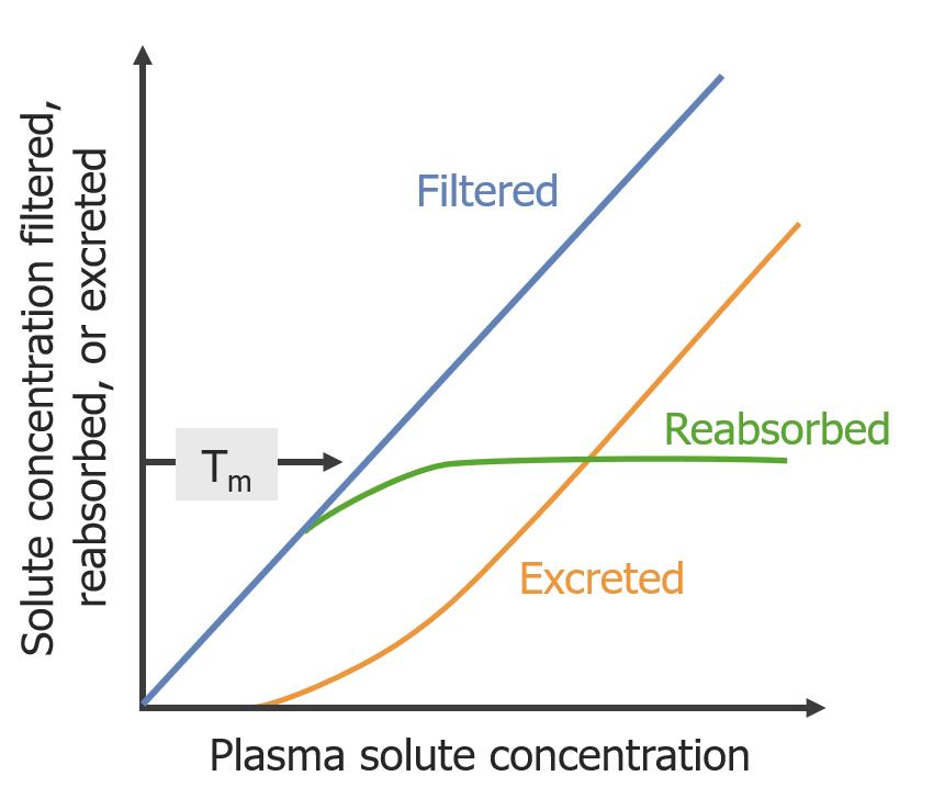 Effect of maximum transport on excretion