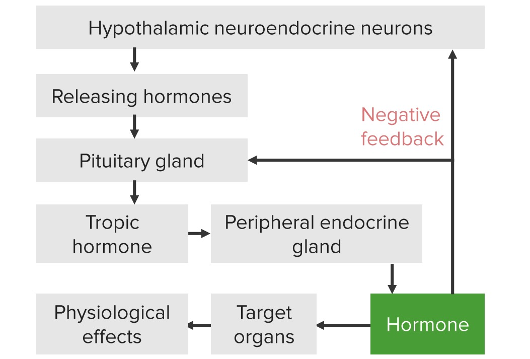 Endocrine axis-driven negative feedback loops