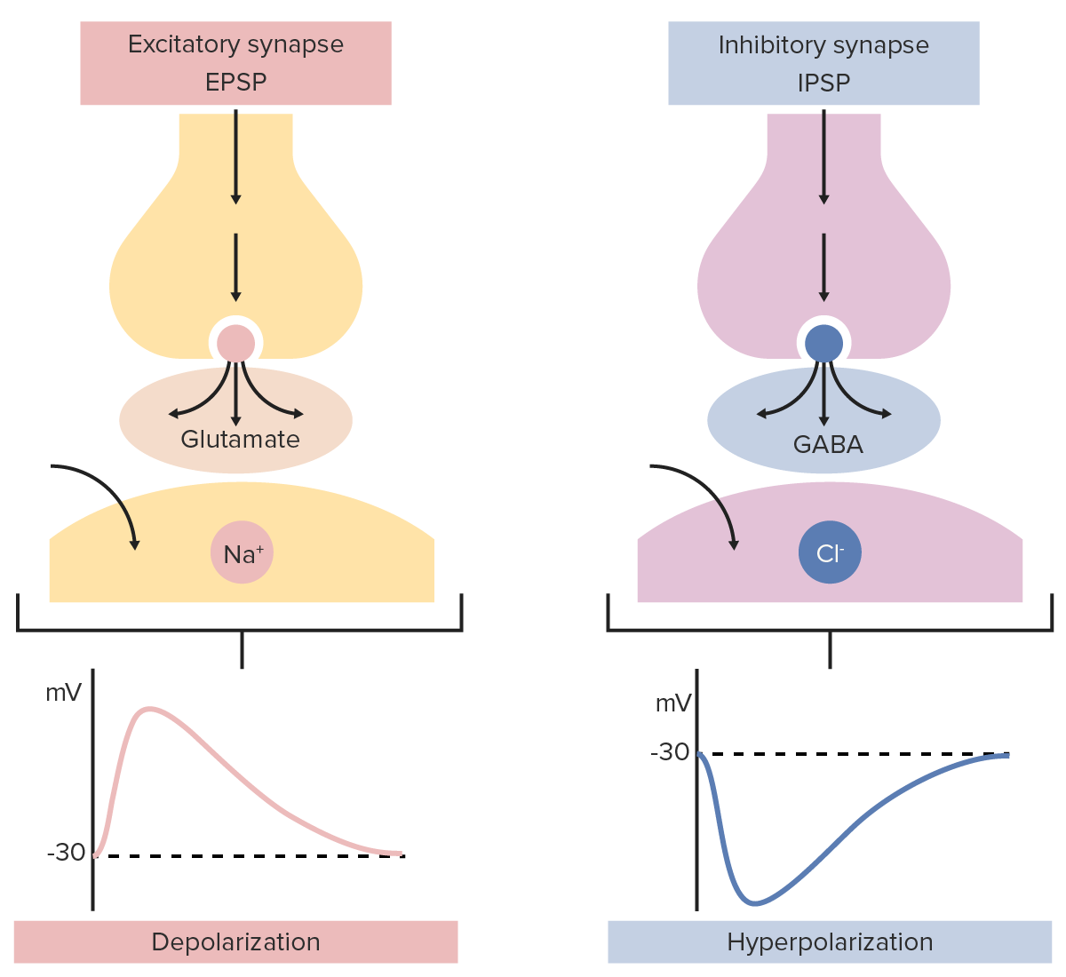 Excitatory and inhibitory synapse examples