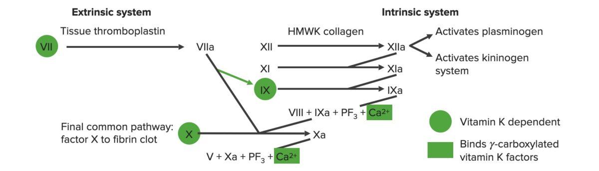 Extrinsic and intrinsic coagulation