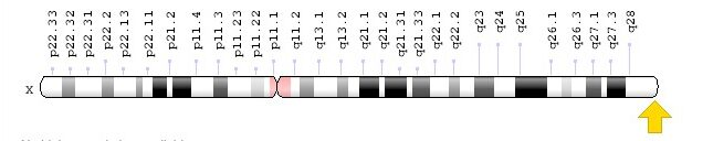 F8 gene location