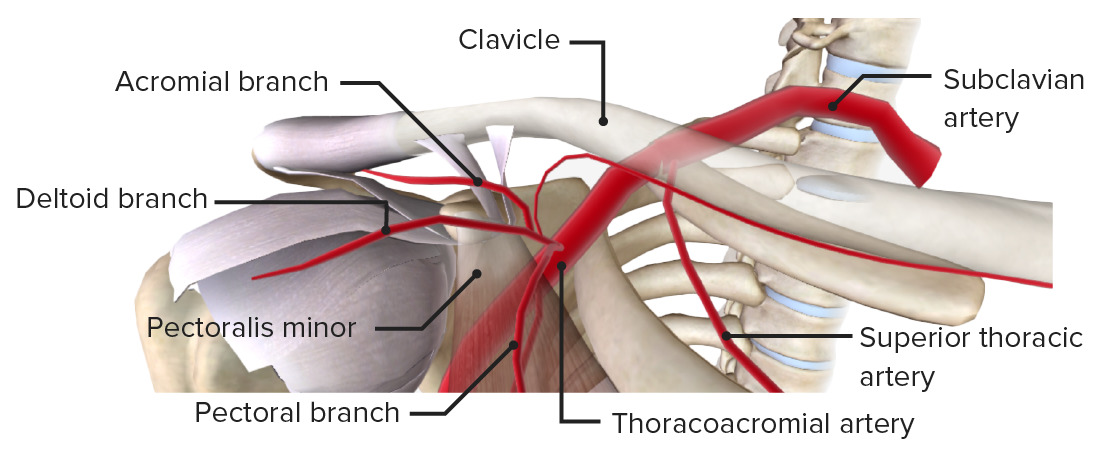 First and second parts of axillary artery
