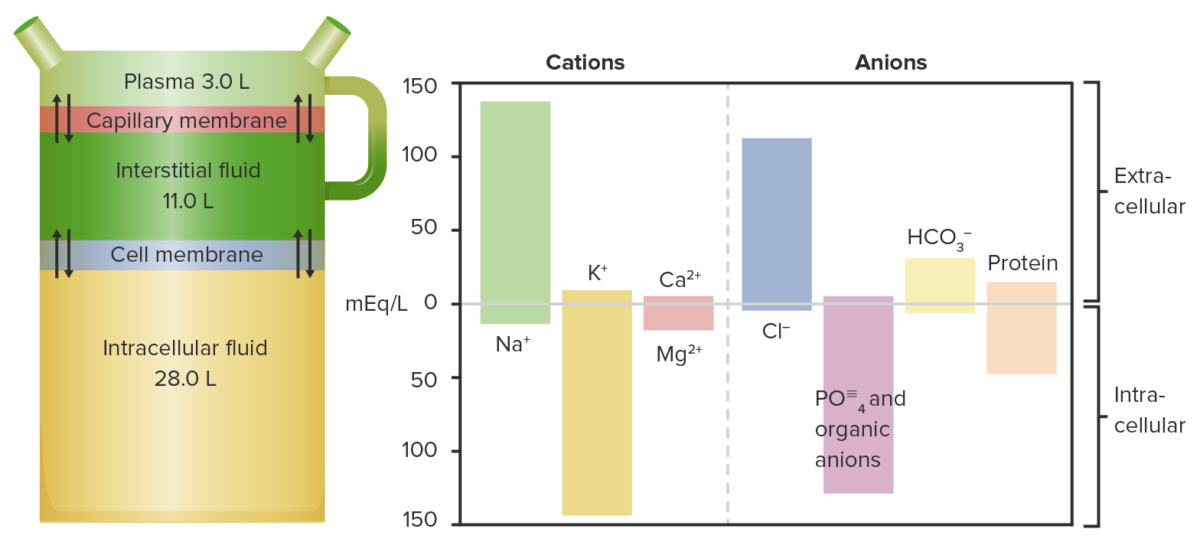 Fluid distribution and their respective cations and anions