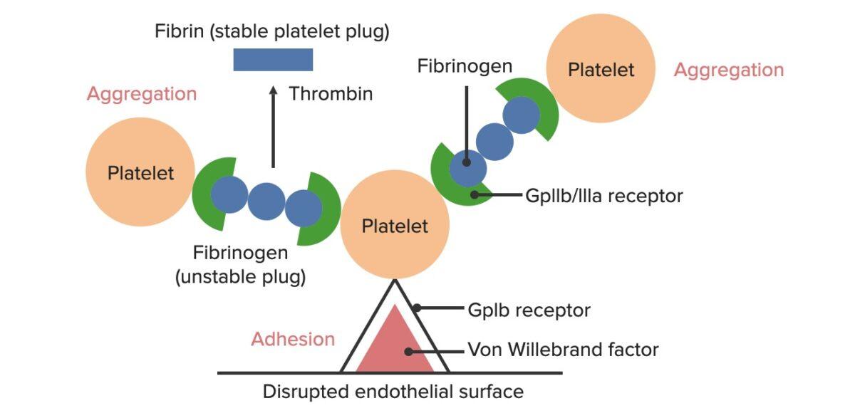 Formation of the temporary hemostatic plug