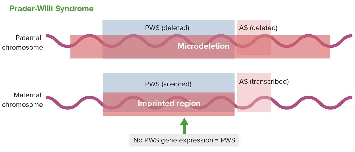 Gene expression in Prader-Willi