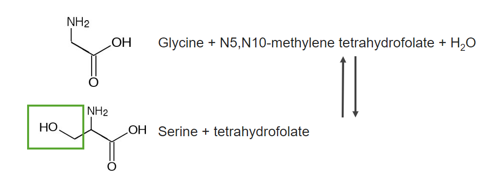 Glycine is produced from serine